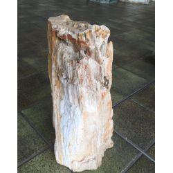 Versteinertes Holz 4047