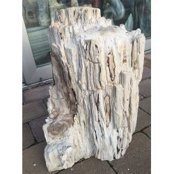 Versteinertes Holz 02911